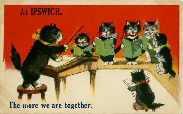 Ipswich cats